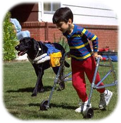 boy on walker and leg braces playing with dog